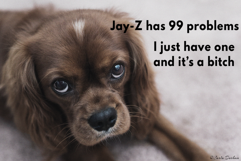 Jay-Z has 99 problems. I only have one and it's a bitch. T-shirt with photo of Jeter, a ruby Cavalier King Charles Spaniel by Carla Durham - Photomusicology